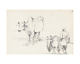 Studies of Indian Cattle