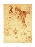 Anatomy Sketches  C1508-12