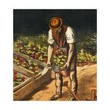 The Gardener  1867