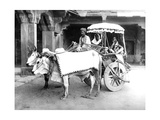 Ox-Drawn Cart  India  C1907
