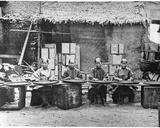 Tea Picking in Canton  C1872