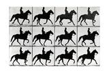 One Stride in Eleven Phases  1881  Illustration from 'Animals in Motion' by Eadweard Muybridge …