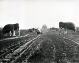 Avenue of Guardian Animals Leading to the Ming Tombs  Peking  C1868-70