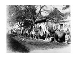Camel Caravan on the Outskirts of Peking  C1875