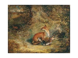 A Fox with a Pheasant