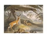 The Pallah  1804-05