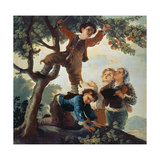 Boys Picking Fruit  Cartoon for a Tapestry  1779-80