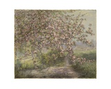 A Blossoming Apple Tree