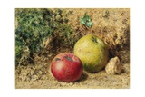 The Contrast - Red and Green Apples  C1860