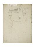 Four Lemurs  1861