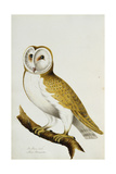 A Barn Owl  Part of an Album of Watercolours of Birds and their Eggs  C 1800