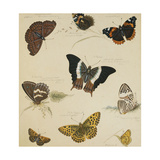 Studies of Butterflies and Insects