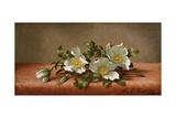 Cherokee Roses  1889