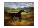 Jack Spigot  a Dark Bay Racehorse in a Paddock at Bolton Hall  1824