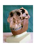 """The Zinjanthropus Skull  also known as Australopithecus Zinjanthropus Boisei or """"Nutcracker Man"""""""