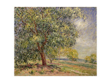 Walnut Tree at Sablons in Spring; Noyers Aux Sablons  Primptemps  1885