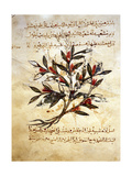 "A Folio from the Arabic Version of Dioscorides ""De Materia Medica"""