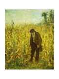 Man in a Cornfield