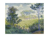 Vineyards under the Pines; Les Vignobles Sous Les Pins  C 1898