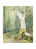 Interior Woodland