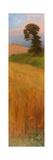 Barley  1882