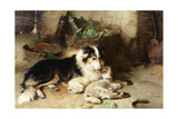 Motherless: the Shepherd's Pet  1897
