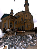 Pigeons at Shah-E Do Shamshera Mosque