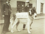 The Political Dog