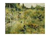 A Fox Taking a Crow; Rav Och Krakor  1884