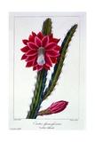 Cactus  1836