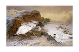 Ptarmigan in the Snow  1898