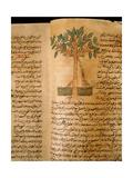 Folio 15V of the Arabic Version of Dioscorides' De Materia Medica