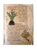 Folio 5V of the Arabic Version of Dioscorides' De Materia Medica