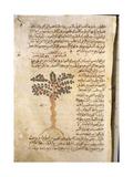 Folio 9R of the Arabic Version of Dioscorides' De Materia Medica