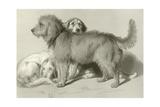 The Three Dogs