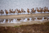 Godwit GetTogether