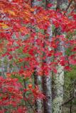 Autumn Red Design