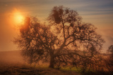 Sun Fog and Oak  Mount Diablo