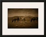 Western Foal