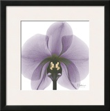 Precious Orchid in Purple