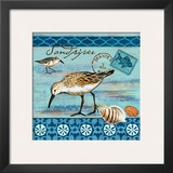 Shorebirds  Sandpiper