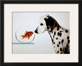 Dalmation Dog Looking at Dalmation Fish