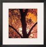Sunset Forest I