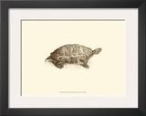 Sepia Turtle I