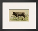 Antique Cow III