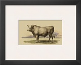 Antique Cow I
