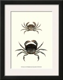 Antique Crab I