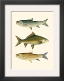 Antique Fish I