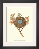 Antique Bird's Nest I