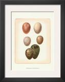 Bird Egg Study VI